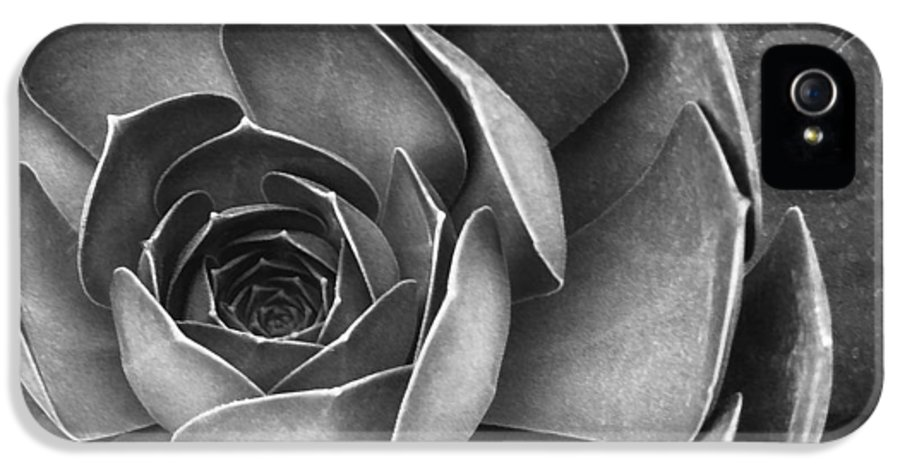 Botanical IPhone 5 / 5s Case featuring the photograph Succulent In Black And White by Ben and Raisa Gertsberg