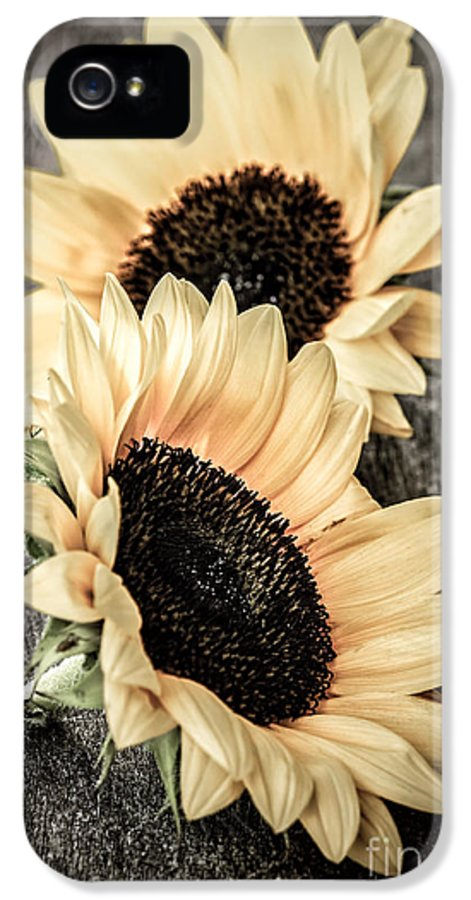 Sunflowers IPhone 5 / 5s Case featuring the photograph Sunflower Blossoms by Elena Elisseeva