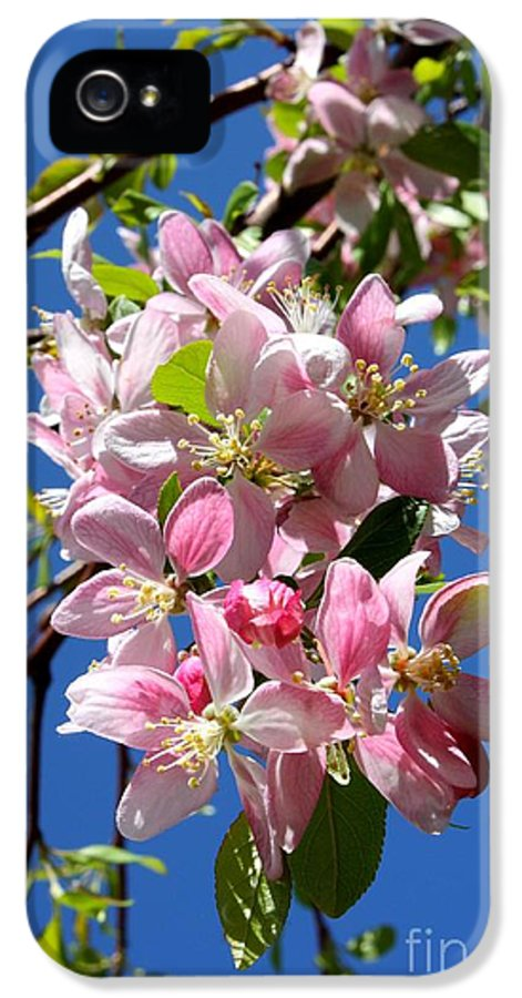 Blossoms IPhone 5 / 5s Case featuring the photograph Sunlight On Spring Blossoms by Carol Groenen