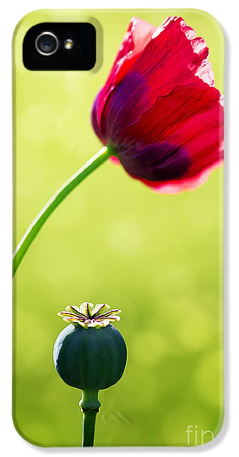 Poppy IPhone 5 / 5s Case featuring the photograph Sunlit Poppy by Natalie Kinnear