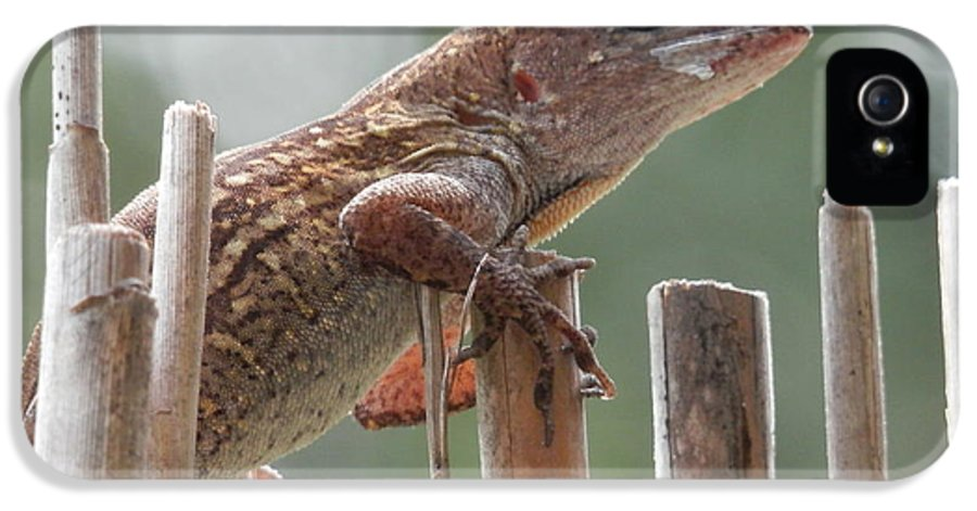 Caught The Lizard IPhone 5 / 5s Case featuring the photograph Sunning Lizard by Belinda Lee