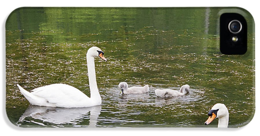 Swan IPhone 5 / 5s Case featuring the photograph Swan Family Squared by Teresa Mucha