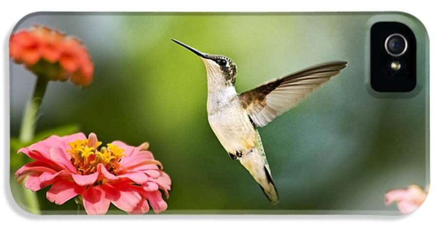 Hummingbird IPhone 5 / 5s Case featuring the photograph Sweet Promise Hummingbird by Christina Rollo