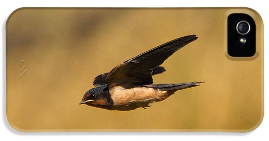Animal IPhone 5 / 5s Case featuring the photograph First Swallow Of Spring by Robert Frederick