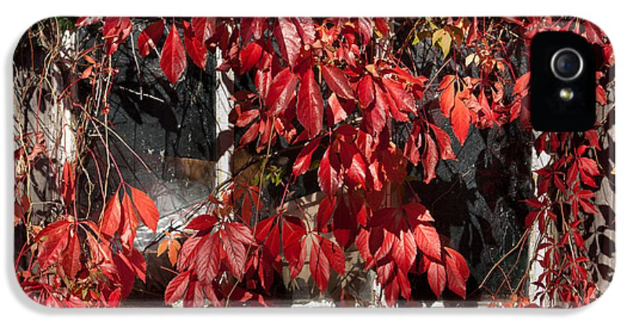 Virginia Creeper And Old Shed IPhone 5 / 5s Case featuring the photograph The Old Shed by John Edwards