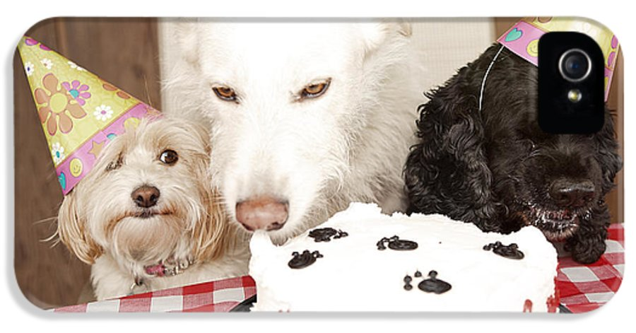 Doggy Birthday Party IPhone 5 / 5s Case featuring the photograph They Are Eating My Cake by Jan Tyler