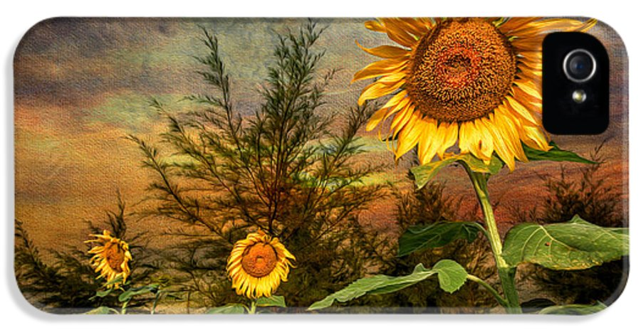Sunflower IPhone 5 / 5s Case featuring the photograph Three Sunflowers by Adrian Evans