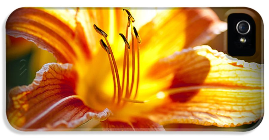 Tiger Lily IPhone 5 / 5s Case featuring the photograph Tiger Lily Flower by Elena Elisseeva