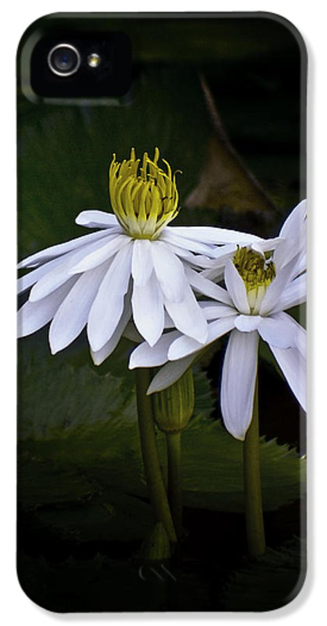 Floral IPhone 5 / 5s Case featuring the photograph Togetherness by Holly Kempe