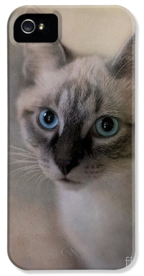 Cat IPhone 5 / 5s Case featuring the photograph Tomcat by Priska Wettstein