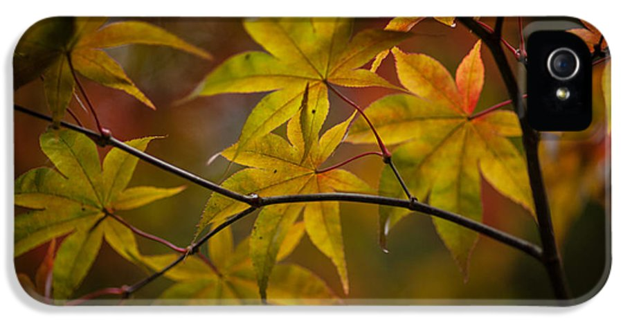 Acer IPhone 5 / 5s Case featuring the photograph Tranquil Collage by Mike Reid