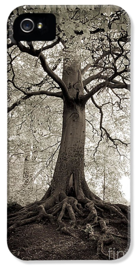 Tree IPhone 5 / 5s Case featuring the photograph Tree Of Life by Dominique De Leeuw