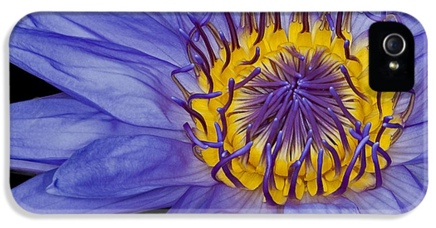 Petals IPhone 5 / 5s Case featuring the photograph Tropical Day Flowering Waterlily by Susan Candelario