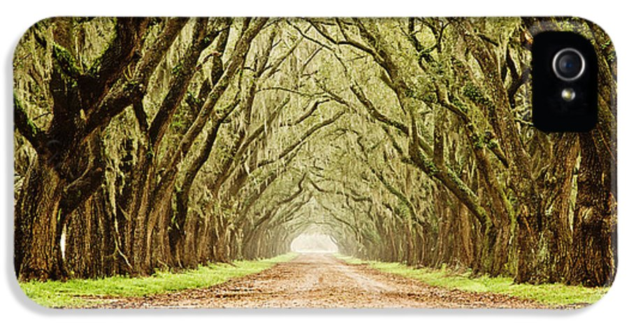 Oak Trees IPhone 5 / 5s Case featuring the photograph Tunnel In The Trees by Scott Pellegrin