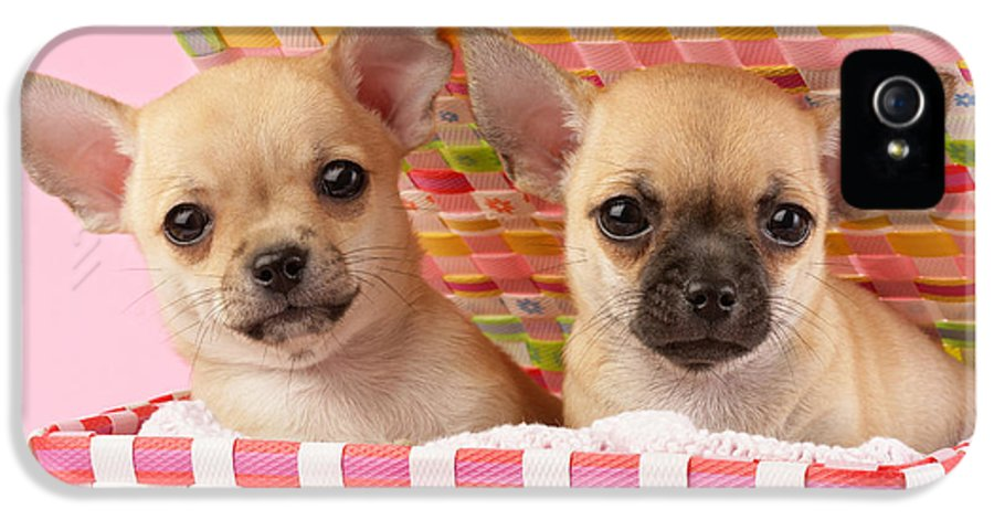 Puppy IPhone 5 / 5s Case featuring the digital art Two Chihuahuas by Greg Cuddiford
