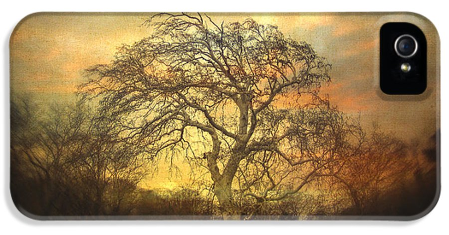 Tree IPhone 5 / 5s Case featuring the photograph Un Dernier Crepuscule by Taylan Soyturk