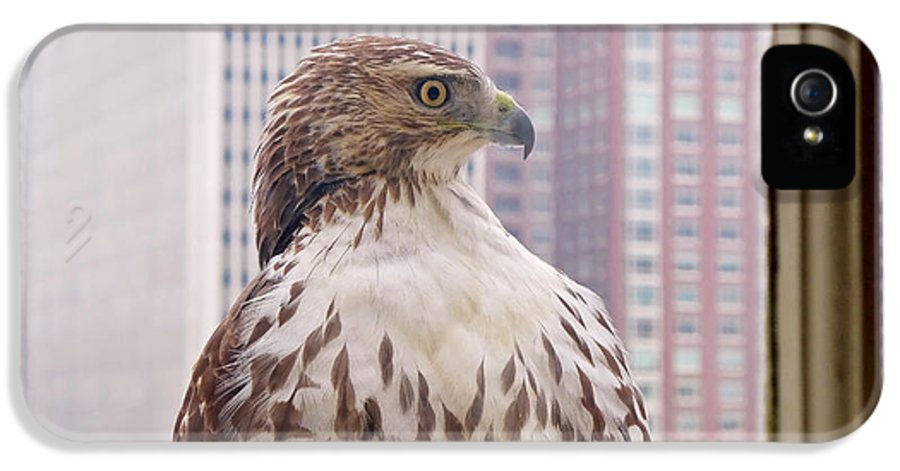 Hawk IPhone 5 / 5s Case featuring the photograph Urban Red-tailed Hawk by Rona Black