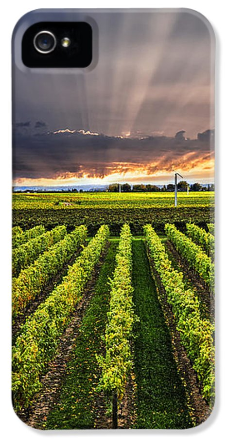 Vineyard IPhone 5 / 5s Case featuring the photograph Vineyard At Sunset by Elena Elisseeva