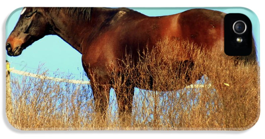 Horses IPhone 5 / 5s Case featuring the photograph Walking Tall by Karen Wiles