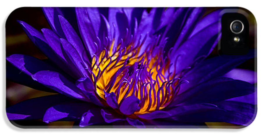 Aquatic Flower IPhone 5 / 5s Case featuring the photograph Water Lily 7 by Julie Palencia