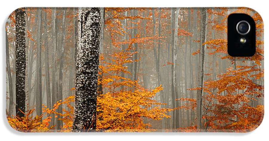 Mist IPhone 5 / 5s Case featuring the photograph Welcome To Orange Forest by Evgeni Dinev