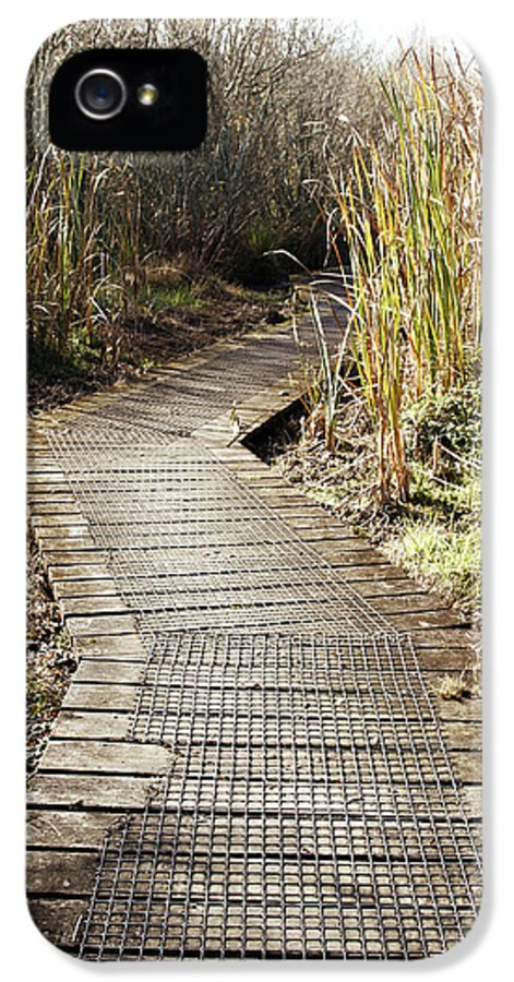 Boardwalk IPhone 5 / 5s Case featuring the photograph Wetland Walk by Les Cunliffe