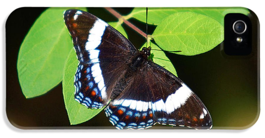 White IPhone 5 / 5s Case featuring the photograph White Admiral Butterfly by Christina Rollo