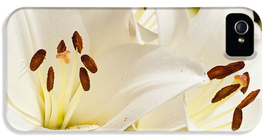 Agriculture IPhone 5 / 5s Case featuring the photograph White Flowers by Oscar Karlsson