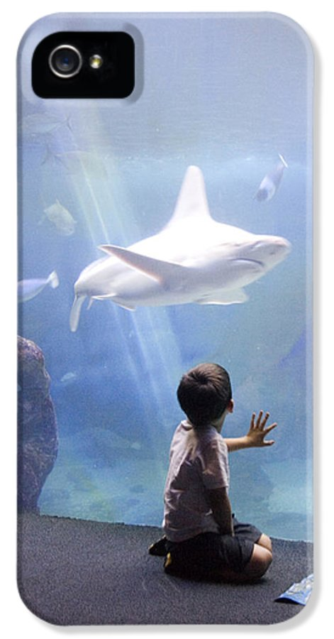 Lahaina IPhone 5 / 5s Case featuring the photograph White Shark And Young Boy by David Smith