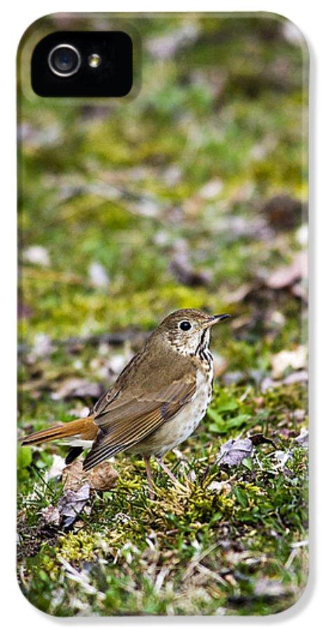 Bird IPhone 5 / 5s Case featuring the photograph Wild Birds Hermit Thrush by Christina Rollo