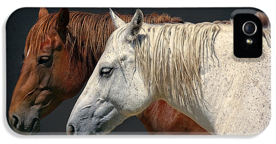 Horses IPhone 5 / 5s Case featuring the photograph Wild Horses by Daniel Hagerman