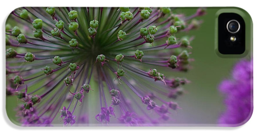 Allium IPhone 5 / 5s Case featuring the photograph Wild Onion by Heiko Koehrer-Wagner