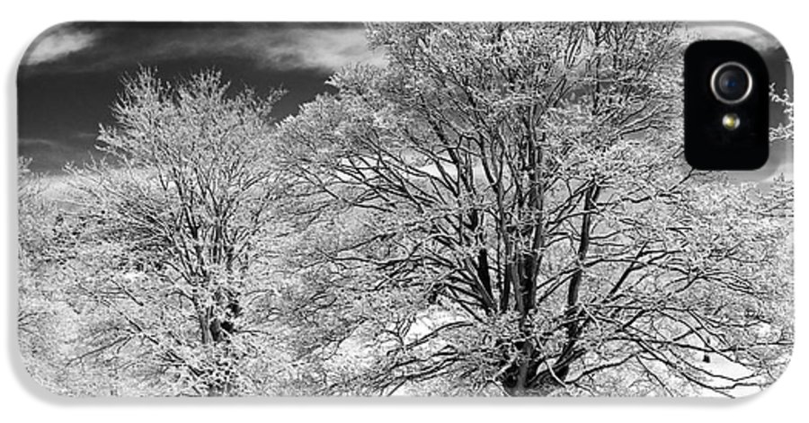 Horse Chestnut IPhone 5 / 5s Case featuring the photograph Winter Horse Chestnut Trees Monochrome by Tim Gainey