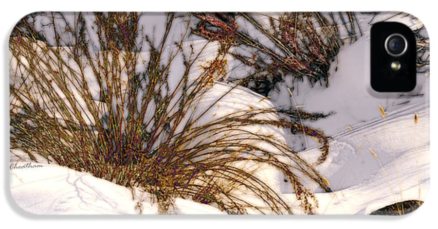 Wintertime IPhone 5 / 5s Case featuring the photograph Winter Weeds by Kae Cheatham