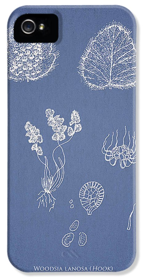 Fern IPhone 5 / 5s Case featuring the drawing Woodsia Lanosa by Aged Pixel