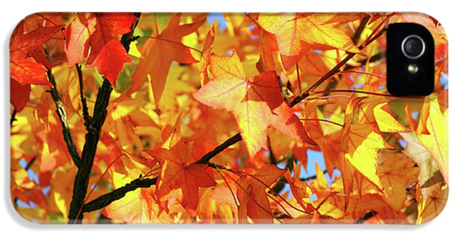 Autumn IPhone 5 / 5s Case featuring the photograph Fall Colors by Carlos Caetano