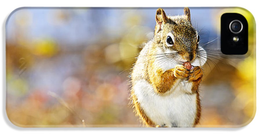 Red Squirrel IPhone 5 / 5s Case featuring the photograph Red Squirrel by Elena Elisseeva