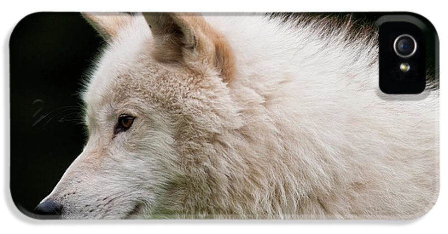 Michael Cummings IPhone 5 / 5s Case featuring the photograph Arctic Wolf by Michael Cummings