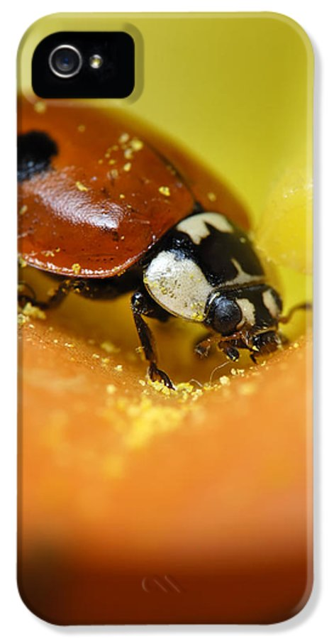 Veins IPhone 5 / 5s Case featuring the photograph Beetle by Igor Sinitsyn