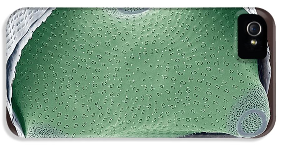 Biddulphia Sp IPhone 5 / 5s Case featuring the photograph Diatom Shell, Sem by Steve Gschmeissner