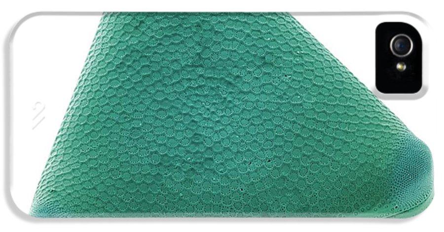 Trigonium Sp. IPhone 5 / 5s Case featuring the photograph Diatom, Sem by Steve Gschmeissner