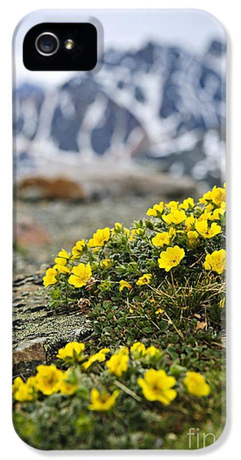Alpine IPhone 5 / 5s Case featuring the photograph Alpine Meadow by Elena Elisseeva