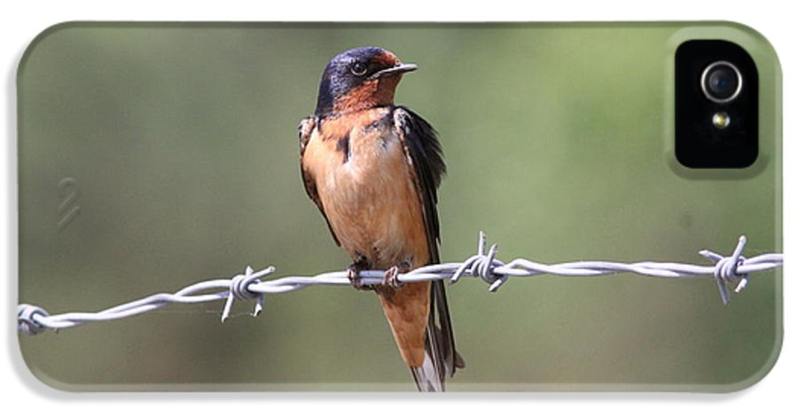 Barn Swallow IPhone 5 / 5s Case featuring the photograph Barn Swallow - Looking Good by Travis Truelove