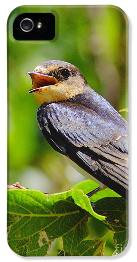 Animal IPhone 5 / 5s Case featuring the photograph Barn Swallow In Sunlight by Robert Frederick