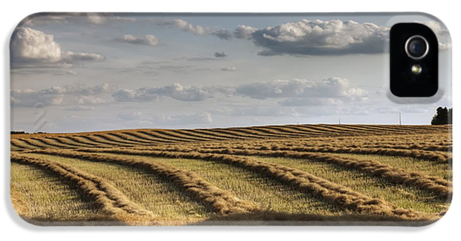Alberta IPhone 5 / 5s Case featuring the photograph Clouds Over Canola Field On Farm by Dan Jurak