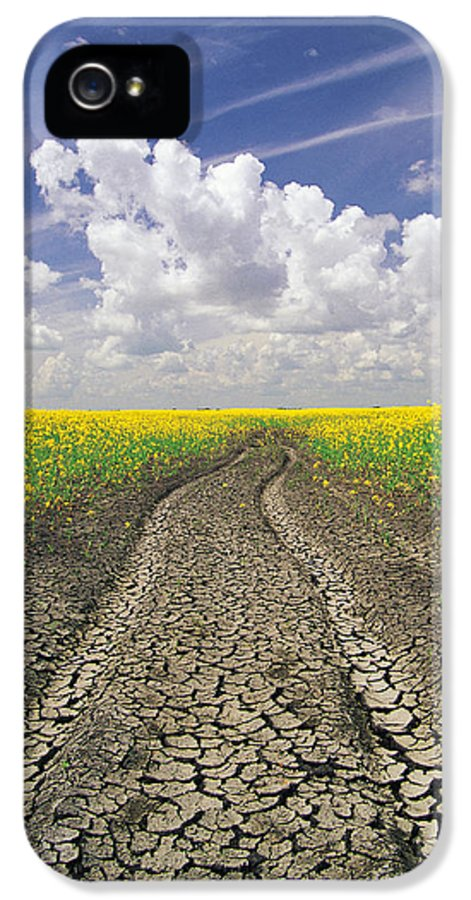 Canola Field IPhone 5 / 5s Case featuring the photograph Dried Up Machinery Tracks by Dave Reede