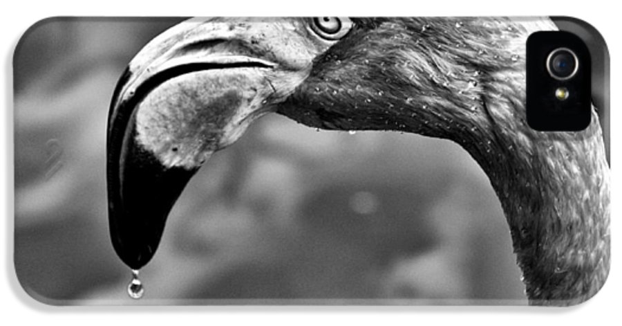 Monotone IPhone 5 / 5s Case featuring the photograph Dripping Flamingo - Bw by Christopher Holmes