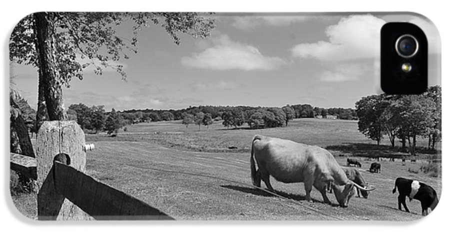 Cattle IPhone 5 / 5s Case featuring the photograph Grazing The Day Away by Catherine Reusch Daley