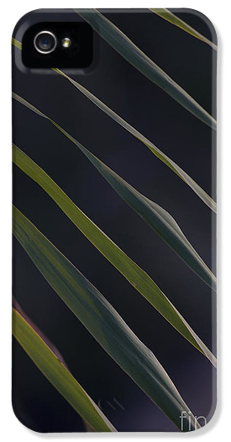 Nature IPhone 5 / 5s Case featuring the photograph Just Grass by Heiko Koehrer-Wagner