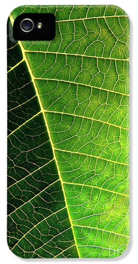 Abstract IPhone 5 / 5s Case featuring the photograph Leaf Texture by Carlos Caetano